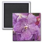 Orquídea de Vanda Imán