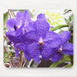 Orquídea de Vanda Pachara Alfombrillas De Ratón