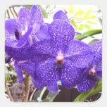 Orquídea de Vanda Pachara Pegatina Cuadradas Personalizada