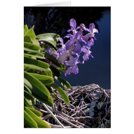 Orquídea de Vanda Tarjeta De Felicitación