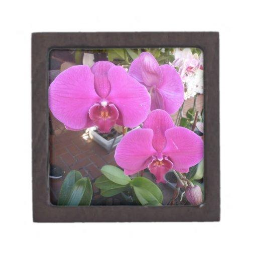 Orquídea del Cymbidium Cajas De Recuerdo De Calidad