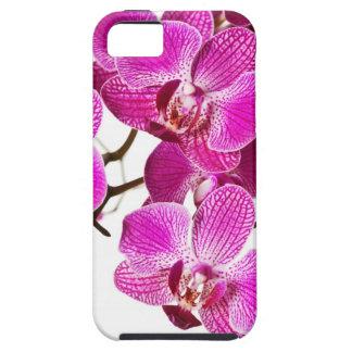 Orquídea del Dendrobium de las rosas fuertes - fon iPhone 5 Fundas