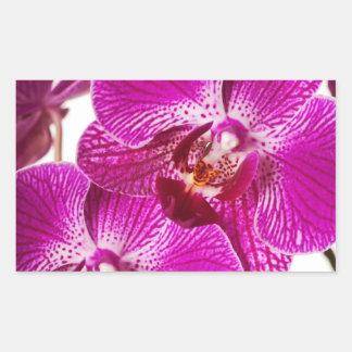 Orquídea del Dendrobium de las rosas fuertes - Pegatina Rectangular