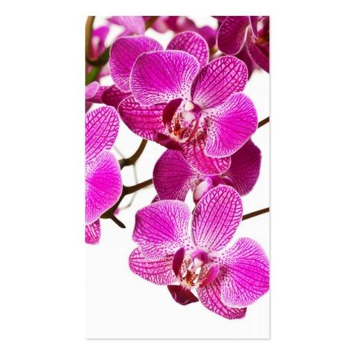 Orquídea del Dendrobium de las rosas fuertes - Tarjetas De Negocios