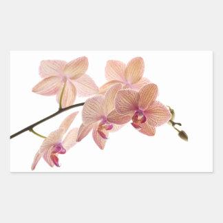 Orquídea del Dendrobium del rosa y del melocotón - Pegatina Rectangular