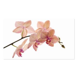 Orquídea del Dendrobium del rosa y del melocotón - Tarjetas De Visita