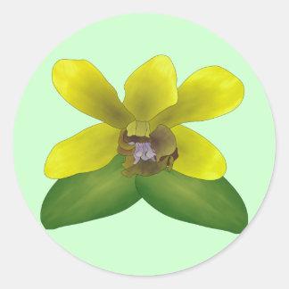 Orquídea del Dendrobium Pegatina Redonda