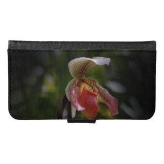 Orquídea del deslizador de señora rosada