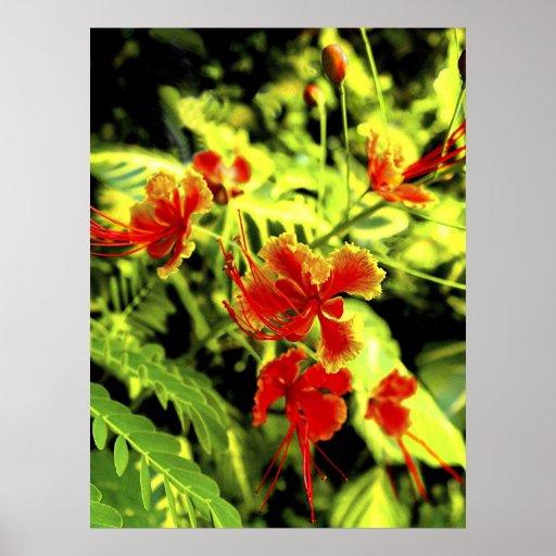 Orquídea del fuego póster