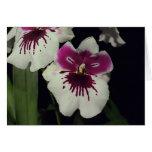 Orquídea del híbrido del Miltonia Tarjeta De Felicitación