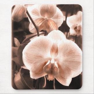 Orquídea del Phalaenopsis del tono de la sepia Alfombrilla De Ratones