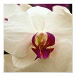 Orquídea del Phalaenopsis Invitación 13,3 Cm X 13,3cm