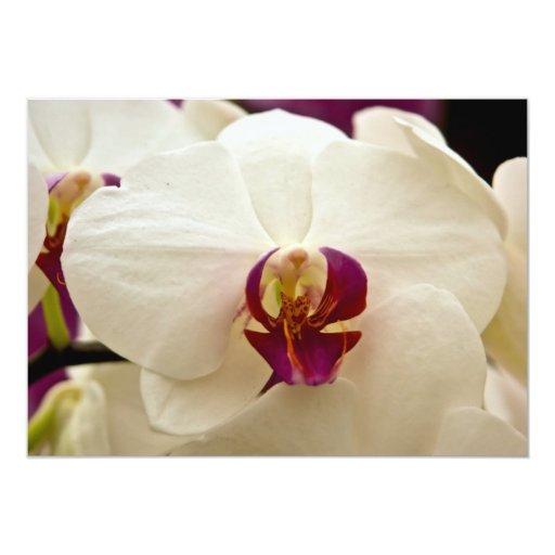 """Orquídea del Phalaenopsis Invitación 5"""" X 7"""""""