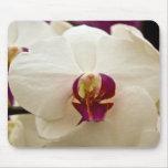 Orquídea del Phalaenopsis Tapete De Ratón