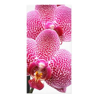 Orquídea del Phalaenopsis Tarjetas Personales