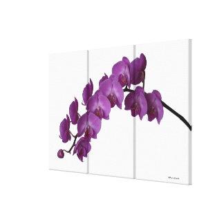 Orquídea del rosa de la fotografía de la bella art impresión en lona