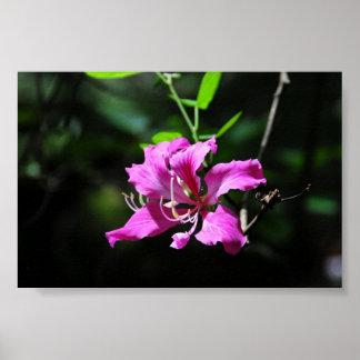 Orquídea del solitario impresiones