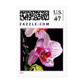 Orquídea dramática - franqueo sellos