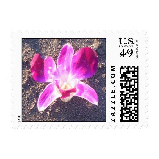 Orquídea en franqueo de la arena