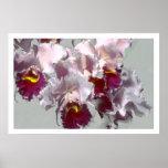 Orquídea en gris, poster
