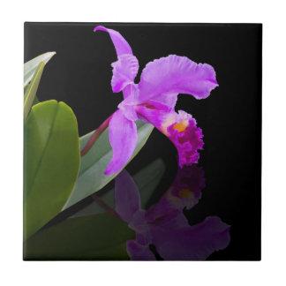 Orquídea en la teja negra
