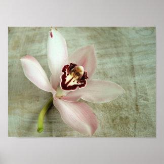 Orquídea en lona póster