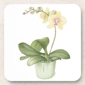Orquídea en prácticos de costa botánicos del pote posavasos de bebidas