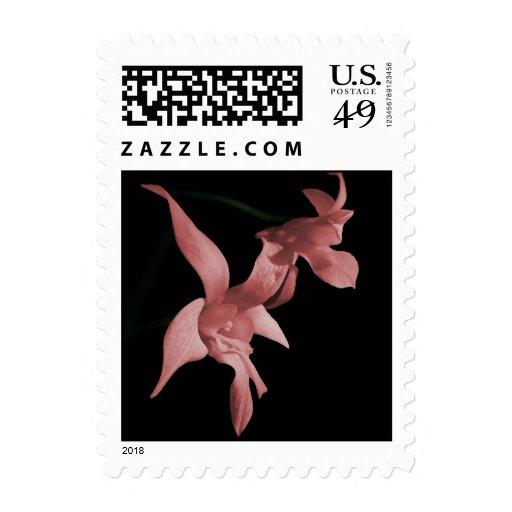 Orquídea en sellos rosados