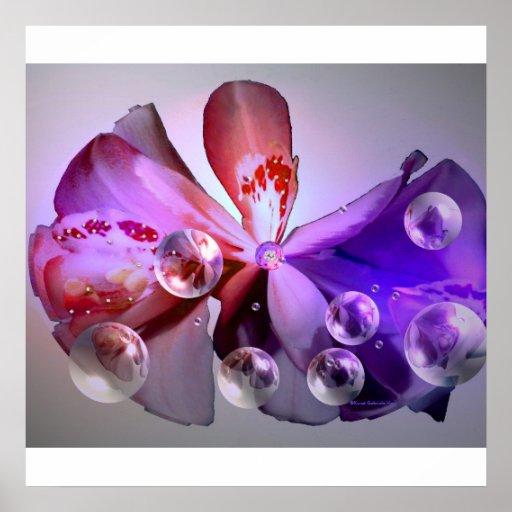 Orquídea en su belleza posters