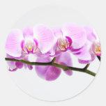 orquídea etiquetas redondas