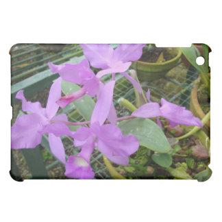 Orquídea -- Flor nacional de Costa Rica