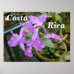 Orquídea -- Flor nacional de Costa Rica Impresiones