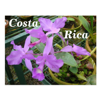 Orquídea -- Flor nacional de Costa Rica Postales