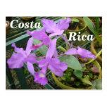 Orquídea -- Flor nacional de Costa Rica Tarjeta Postal