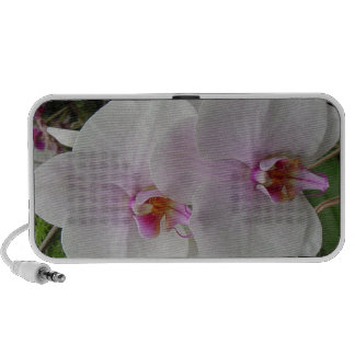 Orquídea - flor rosado (Colossians 2: 3) Portátil Altavoz