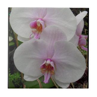 Orquídea - flor rosado (Colossians 2: 3) Azulejo Ceramica