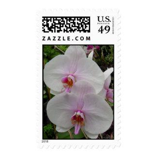 Orquídea - flor rosado (Colossians 2: 3) Envio