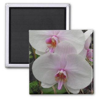 Orquídea - flor rosado (Colossians 2: 3) Imanes De Nevera