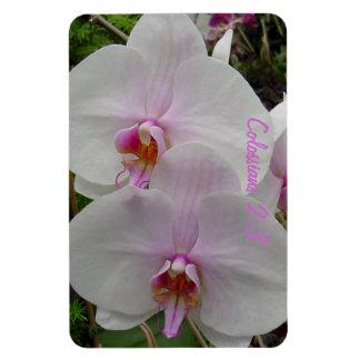 Orquídea - flor rosado (Colossians 2: 3) Imán