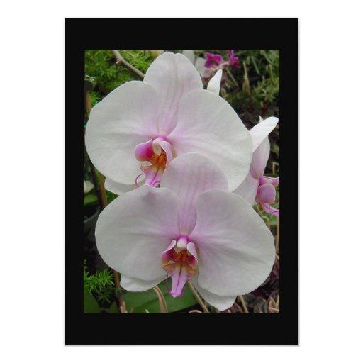 Orquídea - flor rosado (Colossians 2: 3) Comunicado Personalizado