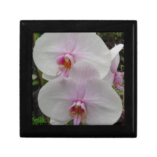 Orquídea - flor rosado (Colossians 2: 3) Caja De Joyas
