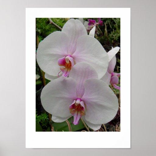 Orquídea - flor rosado (Colossians 2: 3) Impresiones