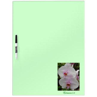 Orquídea - flor rosado (Colossians 2: 3) Pizarra Blanca