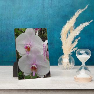 Orquídea - flor rosado (Colossians 2: 3) Placa Para Mostrar