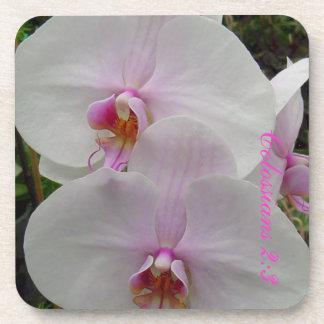 Orquídea - flor rosado (Colossians 2: 3) Posavasos