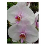 Orquídea - flor rosado (Colossians 2: 3) Postales