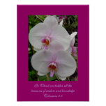 Orquídea - flor rosado (Colossians 2: 3) Poster