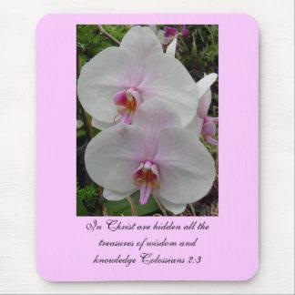 Orquídea - flor rosado (Colossians 2: 3) Tapetes De Ratón