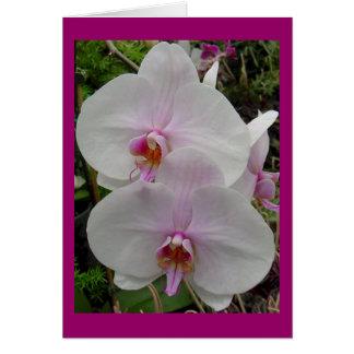 Orquídea - flor rosado (Colossians 2: 3) Tarjeta De Felicitación