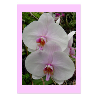 Orquídea - flor rosado (Colossians 2: 3) Plantillas De Tarjeta De Negocio